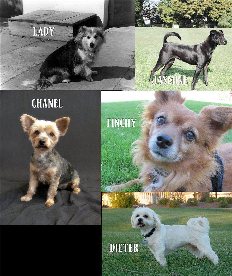 My Dogs.jpg